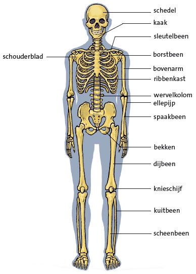 voet anatomie botten